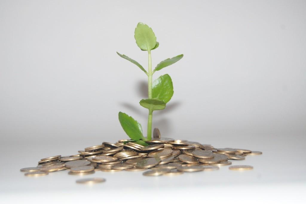 Ein Pflänzchen wächst aus Euromünzen