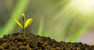 Eine kleine Pflanze wächst aus einem Haufen Erde heraus.